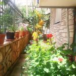 Flowers' House, Sarandë
