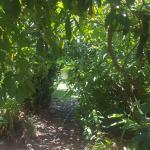 Hotel Pictures: Ecological Lodge Edelweiss, Villa de Catemu