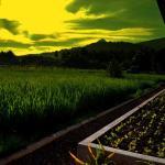 Guerrera Rice Paddy Villas,  Mambajao