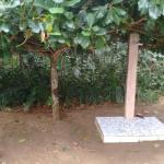 Hotel Pictures: Casa Natureza Green House, Barra Grande