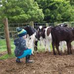 Fotografie hotelů: Manderley Park Farmstay B&B, Buln Buln