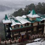 Snow Lotus,  Shimla