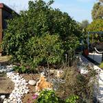 Asbn Magic Garden,  'Akko