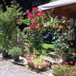 borgoeden, Borgo Val di Taro