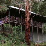 Tall Trees Retreat, Apollo Bay