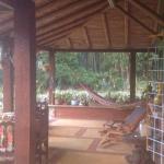 Bambu del Quindio, Quimbaya