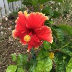 Hibiscus Hideaway,  Witta