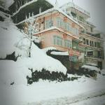 Hangout Home-Stay, Shimla