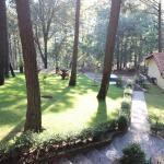 Bosque Sierra, Mazamitla