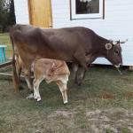 Farm stay, Zaokskiy
