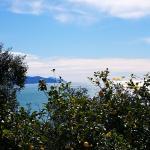 Villino Margiu, Rapallo