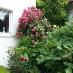 Rosen-Garten,  Niederaichbach