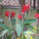 DEV Guest House P.Ltd. Arun Thapa Chowk,  Pātan