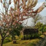 Phu Pai Kaew Resort, Pai