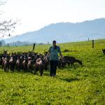 Agroturistika kozí farma Rožnov pod Radhoštěm, Rožnov pod Radhoštěm