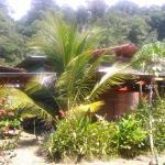 Simbiosis Costa Rica, Pavones