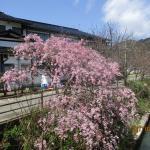 Miharaso, Toyooka