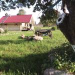 Cottage in Kirillovo,  Kirillovo