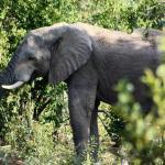 Wild Ivory Eco Lodge, Welgevonden Game Reserve