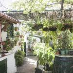Canary House,  Icod de los Vinos
