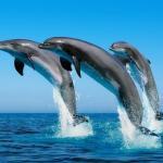 Delfin Guest House,  Dagomys