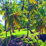 Hostel Boipeba Surf,  Ilha de Boipeba