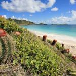 La Luciole Caraibe, Baie Nettle