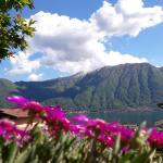 Lago e Ulivi, Ossuccio