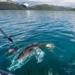 Vikran Vacation: Sea fishing and Northern Lights,  Vikran