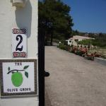 The Olive Grove, Theologos