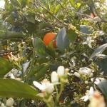 Naxos Garden, Χώρα Νάξου