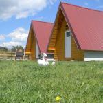 Cottage Borje, Žabljak