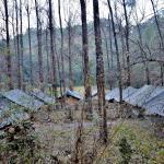 Getaway Jungle Camp, Nainital