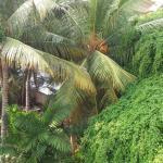 Nildiya Resort, Matara