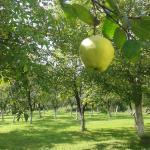 Holiday Green Natura, Lohovo