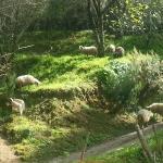 Agriturismo Casa Gioffrè, Cosoleto