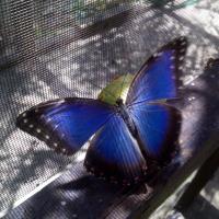 Φωτογραφίες: The Butterfly EcoPark, San Pedro