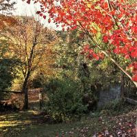 Hotellbilder: Mole Creek Guesthouse, Mole Creek
