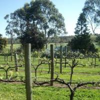 Hotel Pictures: Southern Vales Bed & Breakfast, McLaren Vale