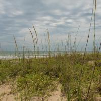 Hotellikuvia: South Padre Island Beach Rentals, South Padre Island