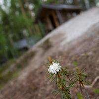 酒店图片: Pielppa Lodge, Orivesi