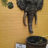Foto Hotel: The Golden Tusk B&B, Kalgoorlie