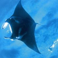 Hotelbilder: Sal Salis Ningaloo Reef, Exmouth