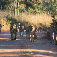 Zdjęcia hotelu: Mawimbi Bush Camp, Chunga