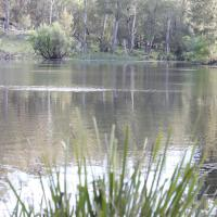 Foto Hotel: Arcadian Cabin - Southern Highlands River Retreat, Canyonleigh