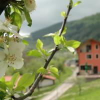 Hotel Pictures: Hotel Garvanec, Druzhevo