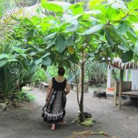 Φωτογραφίες: Batu Nebeng Homestay, Batukaras