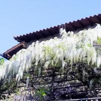 Fotos del hotel: Las Glicinias, Casas del Castañar