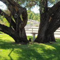 Hotelbilleder: Farm Stay Studio, One Tree Hill