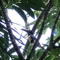 Φωτογραφίες: King Bed Resort, Belmopan
